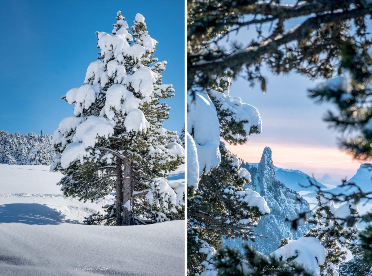 Árvore na neve Hauts-Plateaux du Vercors Paisagem de inverno Mountain Alps Isere França Alpes franceses Paisagem de montanha Winter Snow Tree Outside