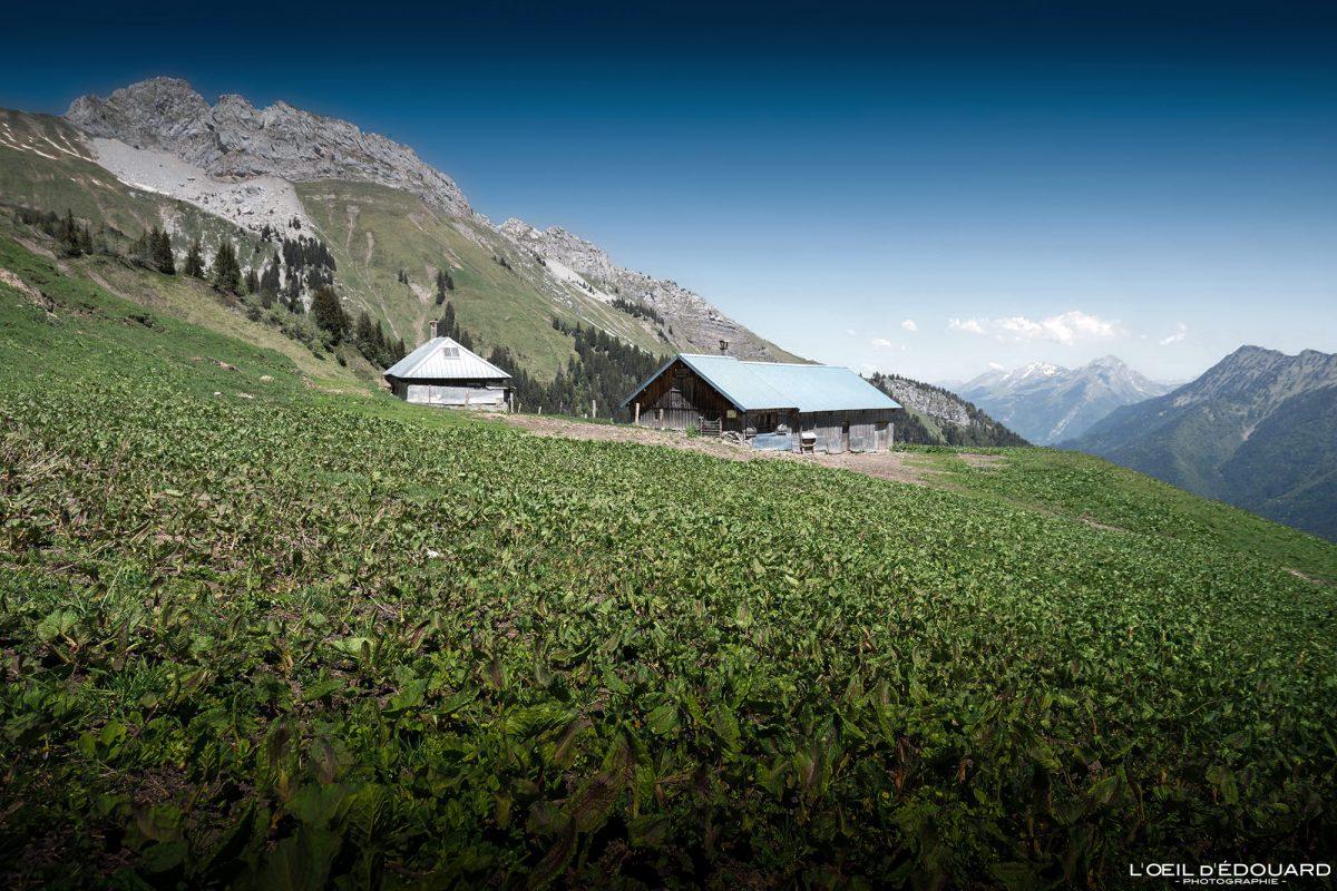 Chalet du Drison e Pointe de la Sambuy - Massif des Bauges Alpes Savoie França Paisagem montanhosa - Casa Paisagem montanhosa Alpes franceses fora