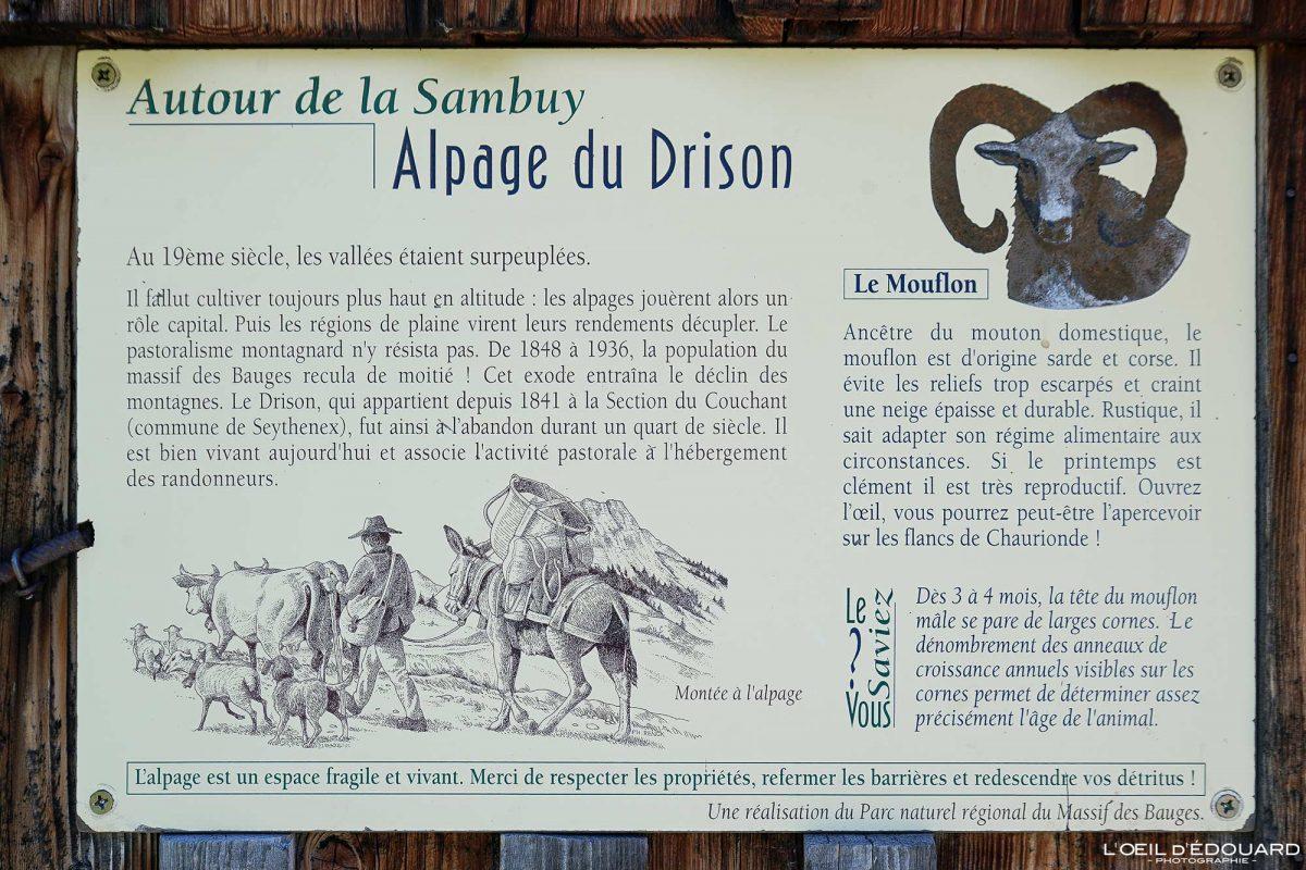 Alpage Chalet du Drison - Massif des Bauges Savoie Alps França Vida nas montanhas - Vida ao ar livre