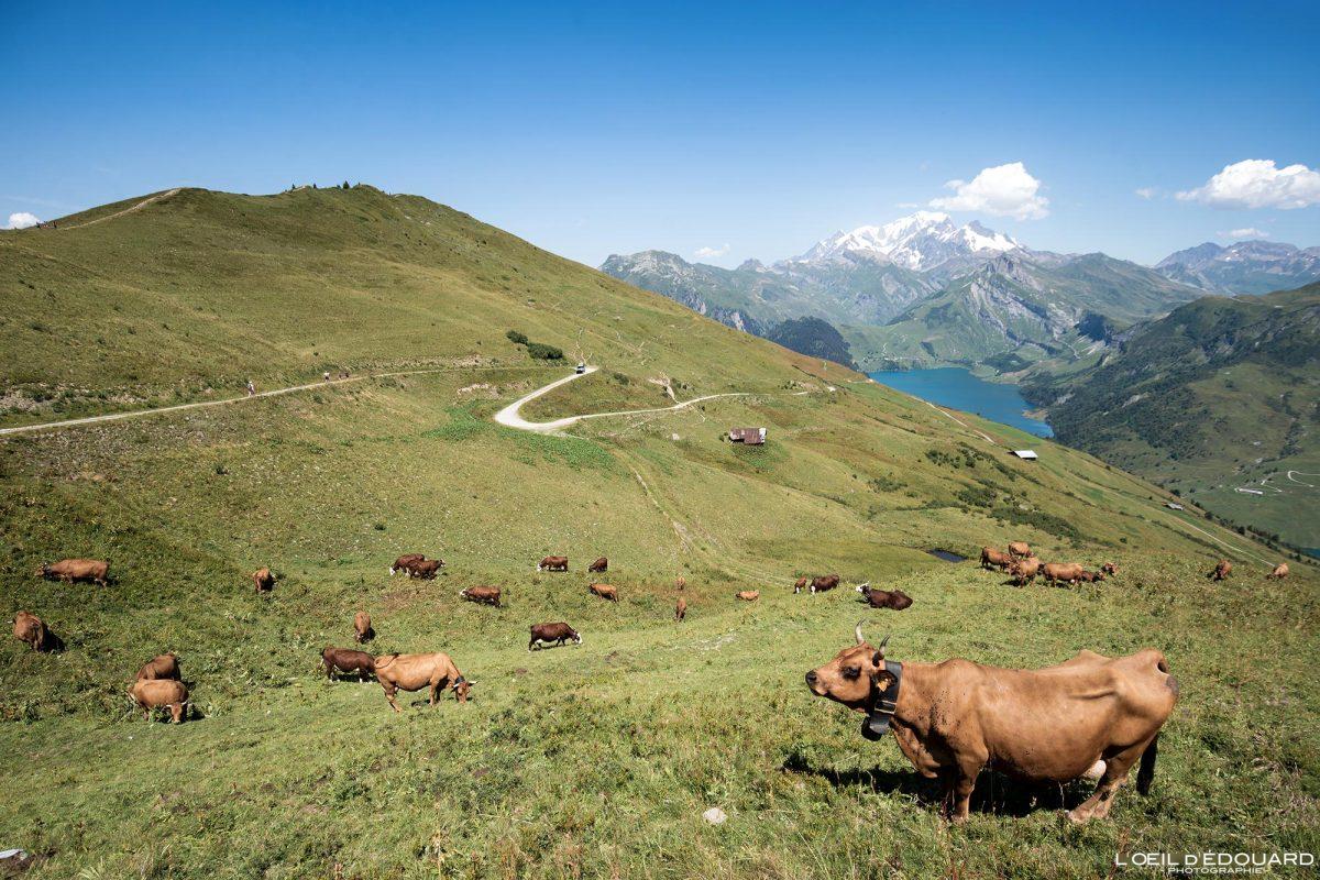 Caminhada Roche Parstire Beaufortain maciço Alpes Savoy França Paisagem Mountain cows Tarines Alpage - Cows Mountain paisagem Alpes franceses Caminhadas ao ar livre Caminhada