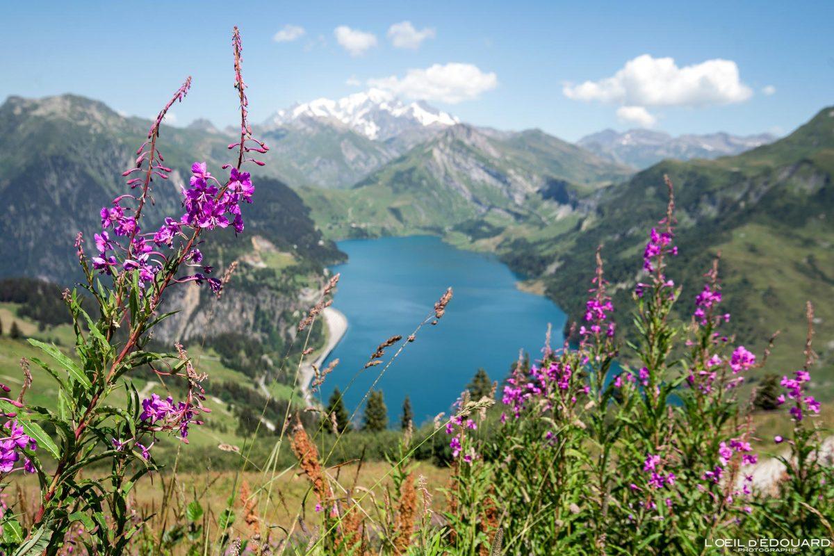 Willowherb Caminhada Roche Parstire Beaufortain Maciço Lac de Roselend Savoie Alpes França Montanha Flor Paisagem - paisagem Flor Montanha lago Alpes franceses Caminhada Caminhada