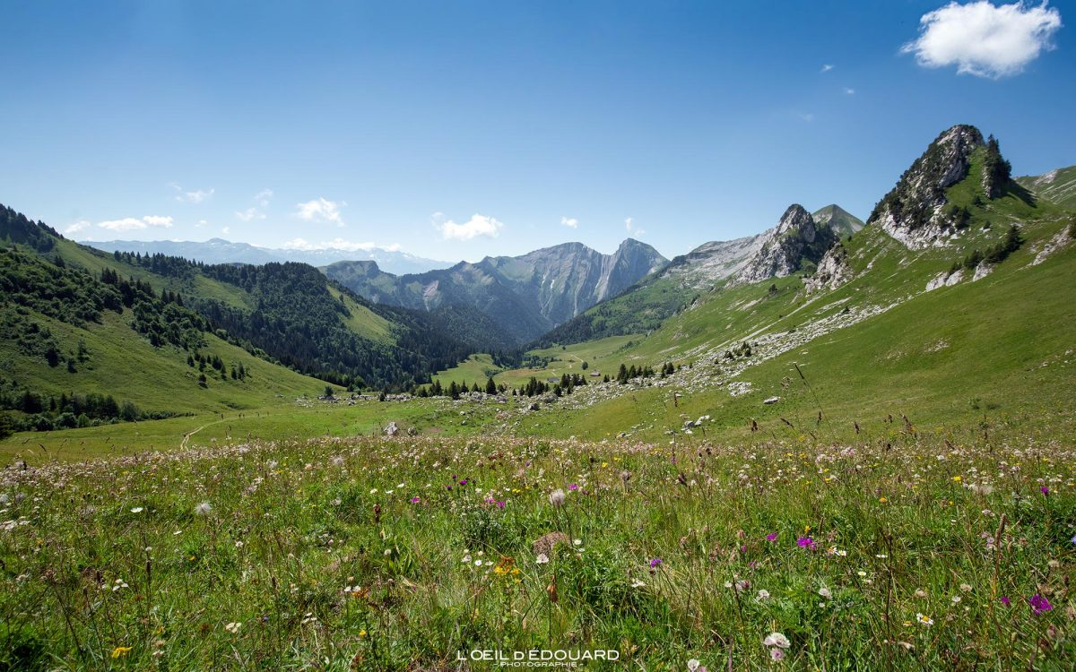 Maciço do Col d'Orgeval des Bauges Alpes de Savoie, França, montanha, caminhadas, paisagem, montanha, ao ar livre, Alpes franceses, montanha, paisagem