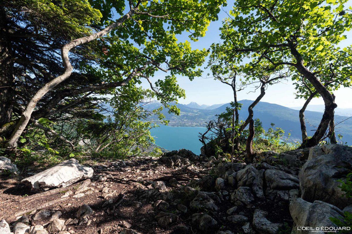 Vista no Lago Annecy - Caminhada Mont Veyrier - Annecy Haute-Savoie França Forest Mountain - Paisagem montanhosa Alpes franceses Excursão ao ar livre Caminhada no lago