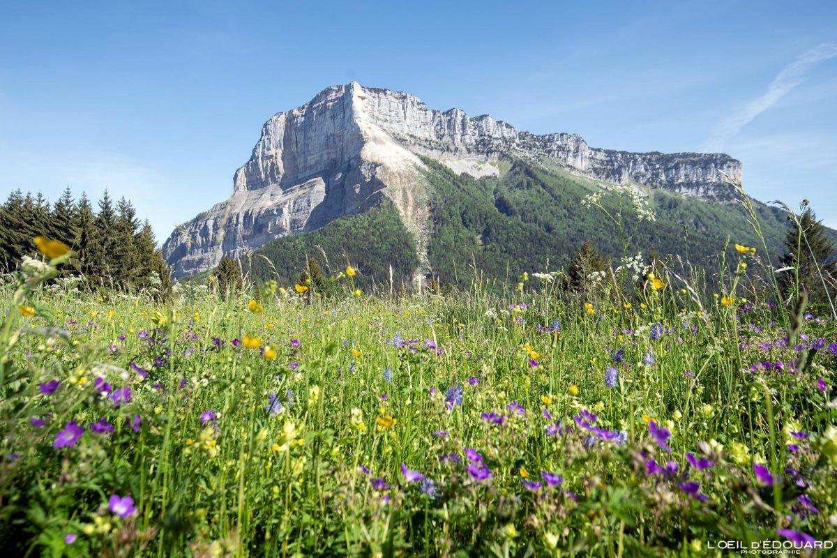 Prado de flores de montanha - Col du Granier Mont Granier de Chartreuse Maciço Alpes Savoie França - Flores de montanha ao ar livre, Alpes franceses