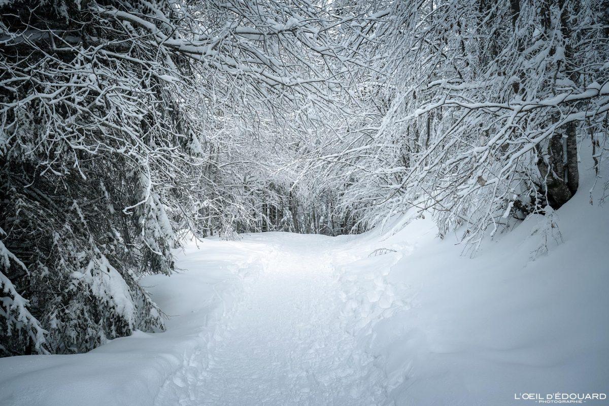 Alpinismo Caminhada Croix des Bergers Le Revard Maciço de Bauges Savoie Alpes Montanha Neve Paisagem Montanha Floresta de inverno França Neve Paisagem montanhosa