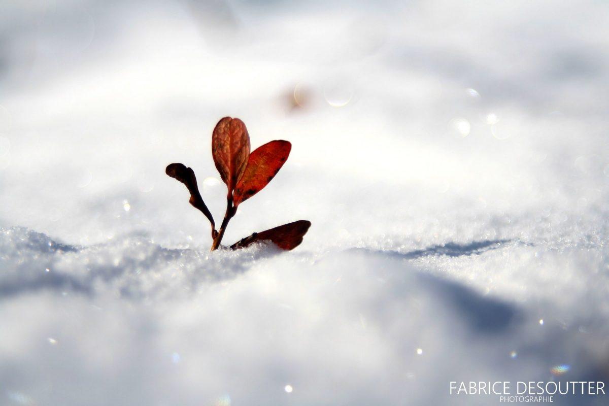 Plante na neve - Blog de viagens e atividades ao ar livre Siga seu itinerário