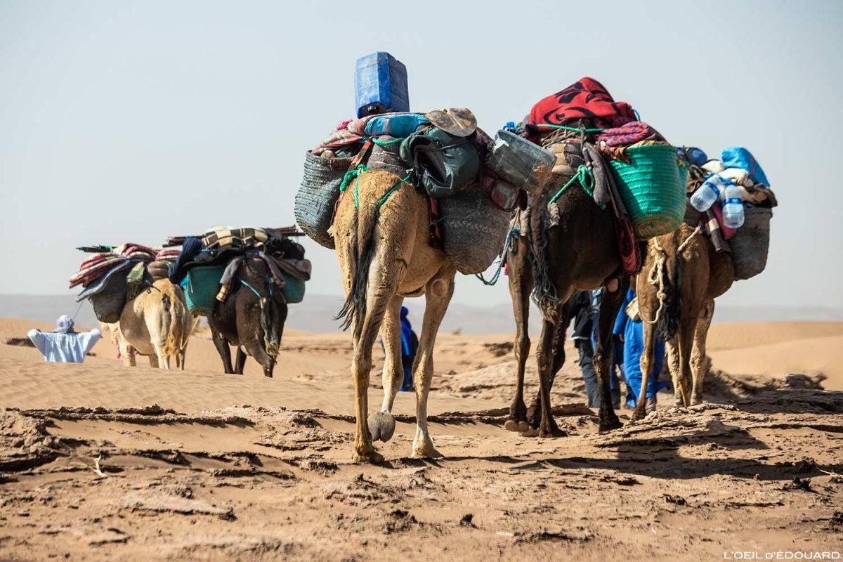 Caravana de camelos durante a caminhada no deserto marroquino com Mélodie du Désert