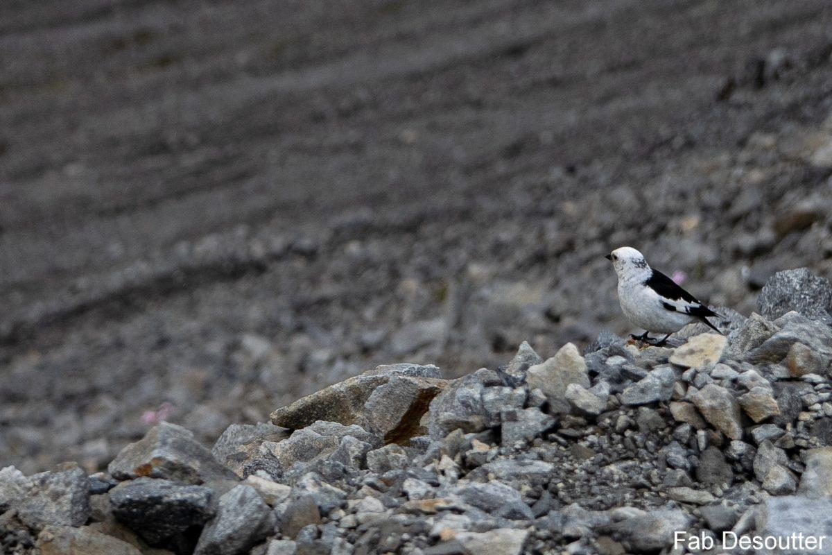 Vogelwanderung Laugavegur Landmannalaugar Ilha de Thorsmörk Mountain trekking Islândia Vogelberg Islensk Outdoor Wild