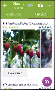 Aplicativo Pl @ ntnet, identifique os nomes das plantas
