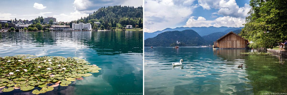 Lago Bled, Eslovênia - Lago Bled, Eslovênia