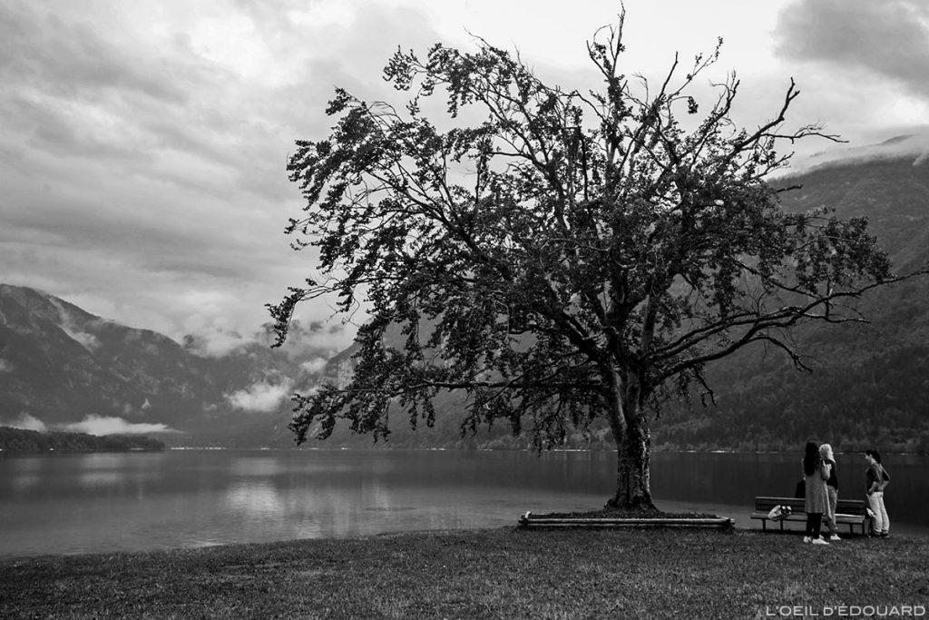 Lago Bohinj, Eslovênia - Lago Bohinj, Eslovênia / Ribčev Laz, Lago Bohinj, Eslovênia © L'Oeil d'Édouard