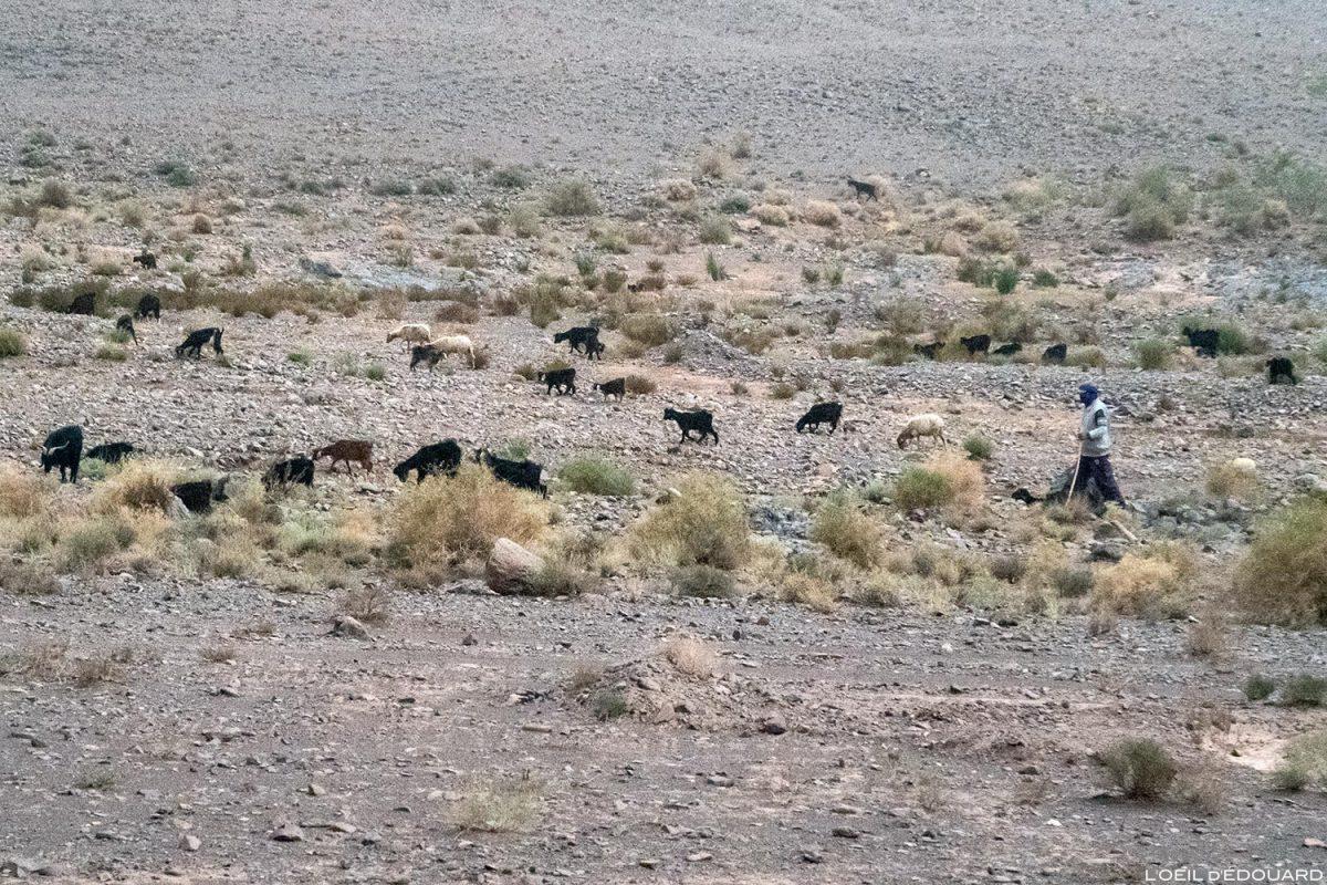 Pastor marroquino e suas cabras