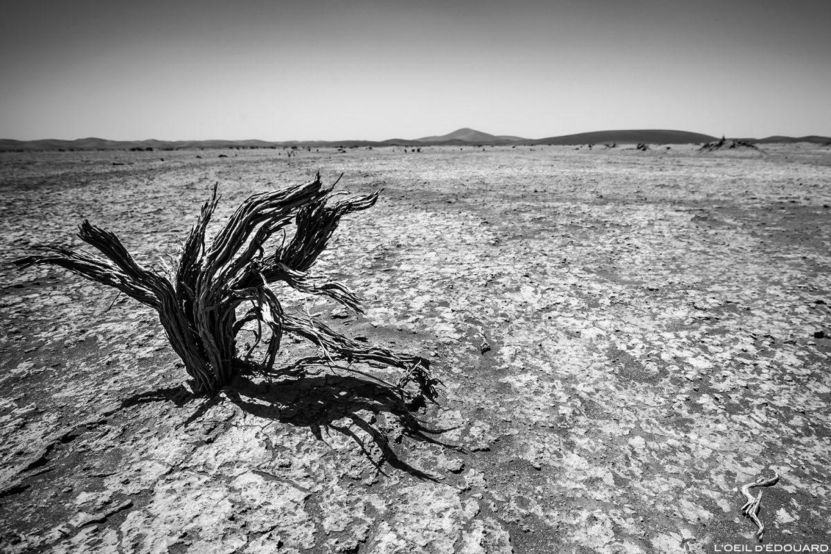 Árvore morta no deserto de Marrocos