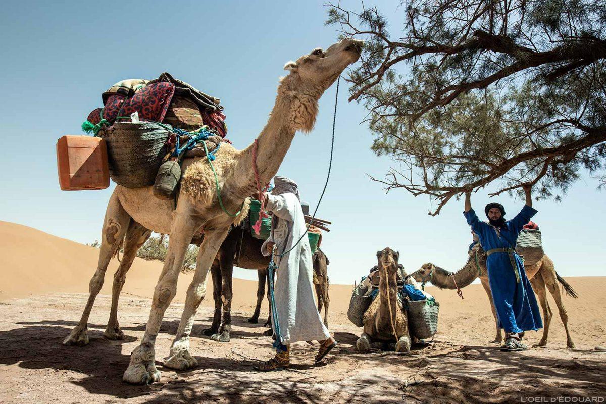 Dromedários e nômades saharauis no deserto marroquino - Desert Melody Trek © L'Oeil d'Édouard