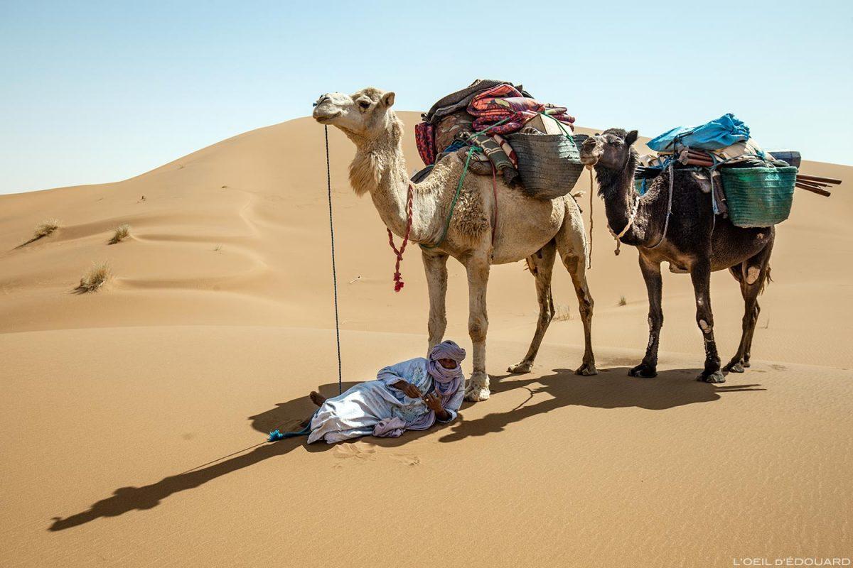Nômades e camelos saharauis no deserto de Marrocos