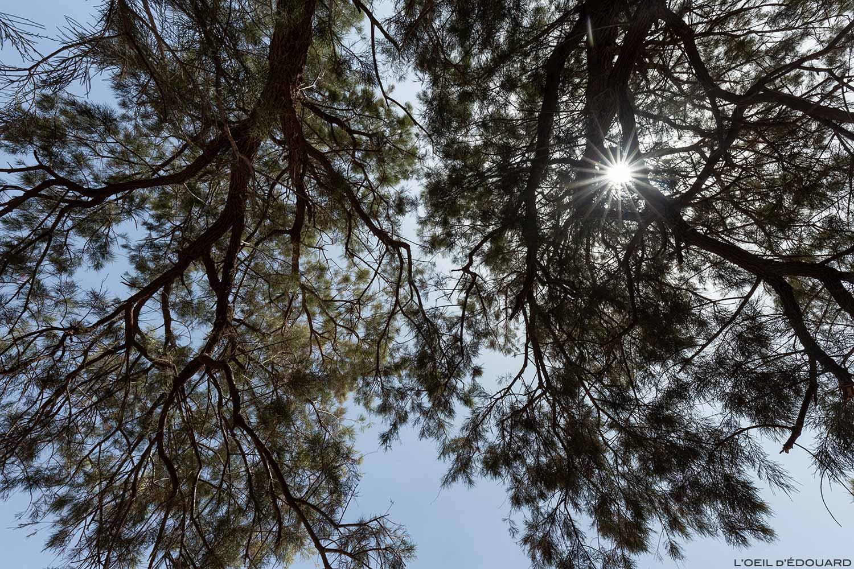 À sombra das tamargueiras no deserto marroquino