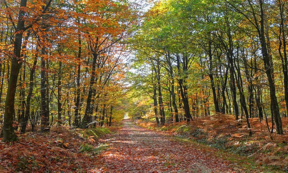 """A floresta de Bercé com suas florestas de carvalhos, coníferas e n.""""http://viajeaqui.abril.com.br/cidades/franca-vale-do-loire"""" rel =""""Vale do Loire"""" Objetivo =""""_vazio""""> O Vale do Loire é considerado um dos mais bonitos""""http://viajeaqui.abril.com.br/paises/franca"""" rel =""""França"""" Objetivo =""""_vazio""""> França""""http://viajeaqui.abril.com.br/materias/florestas-encantadas-pelo-mundo"""" rel =""""+ Fotos: 36 florestas mágicas ao redor do mundo"""" Objetivo =""""_vazio""""> <strong>+ Fotos: 36 florestas mágicas ao redor do mundo</strong>"""" class=""""lazyload"""" data-pin-nopin=""""true""""/></div> <p class="""
