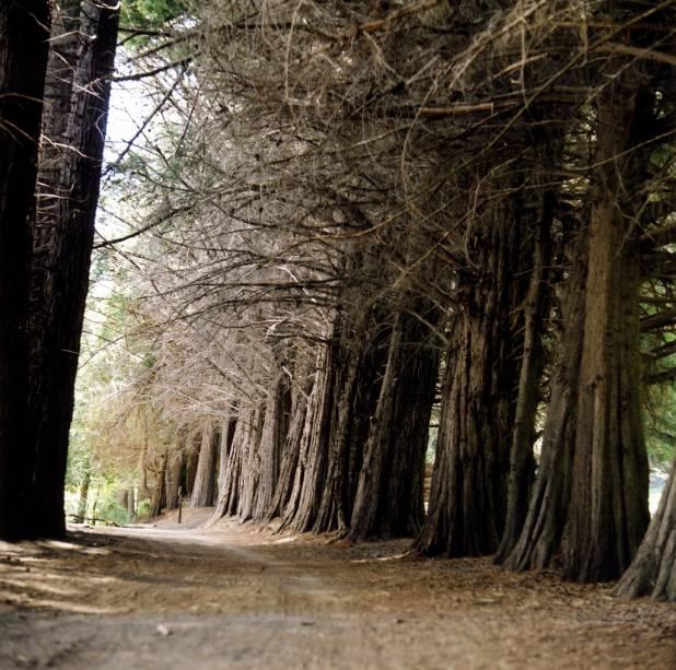 Uma das principais atrações de Bariloche, Isla Victoria é ocupada por um beco de sequoias que você pode desfrutar ao longo de um curto caminho de 600 metros.