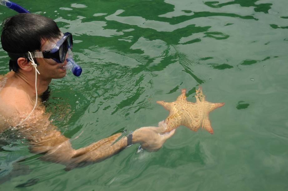 Estrela do mar na baía de Paraty