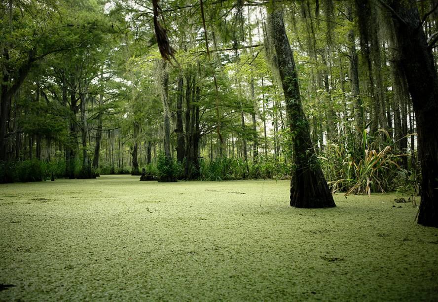 Nova Orleans tem muitos pântanos, lagoas e lagos nas proximidades.  Passeios de um dia levam você a lugares como o Parque Nacional Jean Lafitte