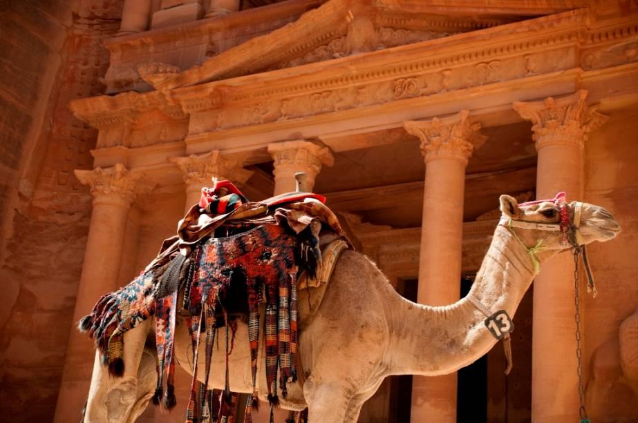 Os dromedários desempenharam um papel decisivo nas caravanas comerciais dos nabateus.  Embora ainda seja importante para os nômades, seu papel na região de Petra hoje é mais limitado a fazer os turistas felizes com boas fotos e passeios.