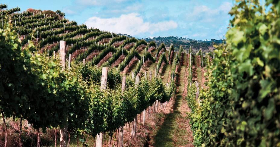 Vinhedos da vinícola Sanjo