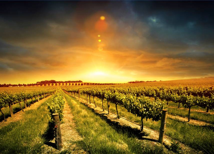 O Vale Barossa, a 86 quilômetros de Adelaide, é a região vinícola mais famosa do estado