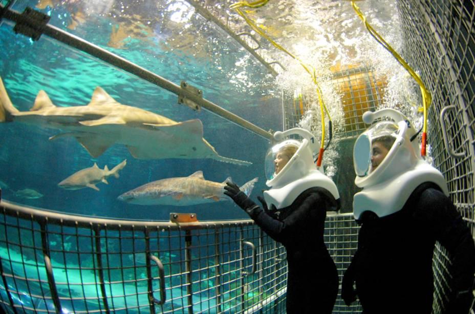 Na atração SeaWorld Sharks Deep Dive, os visitantes usam capacetes Sea Trek para exposição aos tubarões