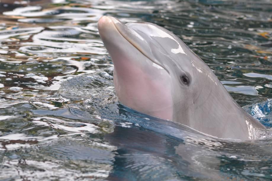 Apresentação de golfinhos no SeaWorld