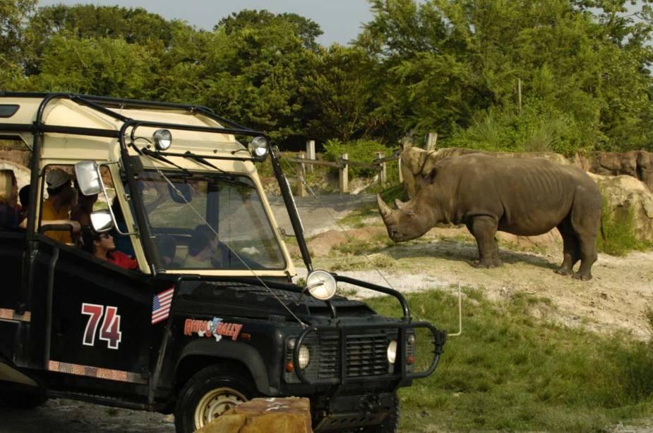 Jeep Land Rover durante safári de rali de rinoceronte, atração do Busch Gardens Park, baía de Tampa