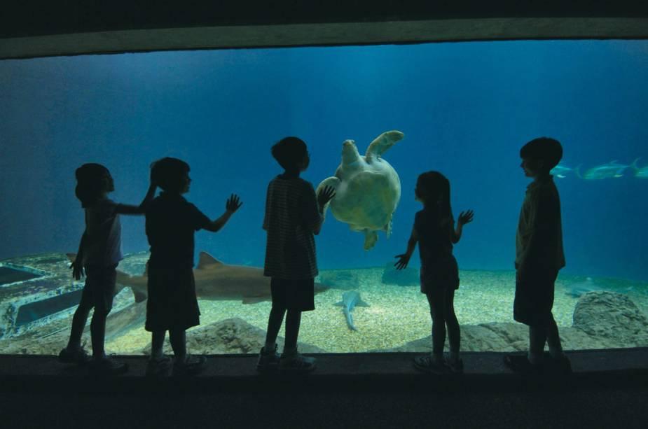 O Aquário da Flórida é uma visita típica a Tampa