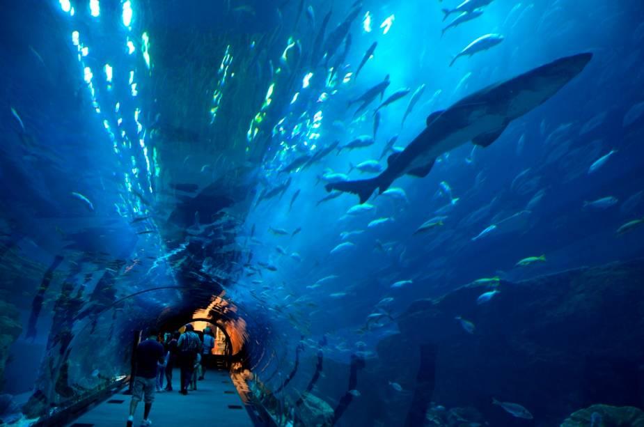 O incrível Dubai Aquarium está localizado no maior shopping center do mundo, o Dubai Mall