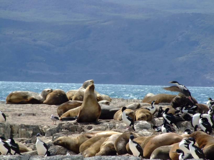 Ao visitar o Canal de Beagle, o barco passa pela Isla de Los Lobos, onde leões marinhos se espalham nas rochas.