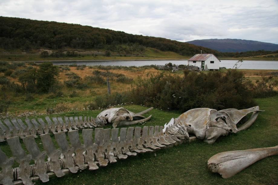 O Museu Acatushún na Estancia Harberton reúne uma coleção de esqueletos de mais de 2.700 mamíferos marinhos, como baleias e golfinhos e 2.300 pássaros