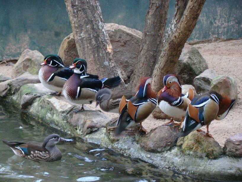Patos no Espaço Bird Land, no Hot Park, no complexo Rio Quente Resorts, em Rio Quente, Goiás