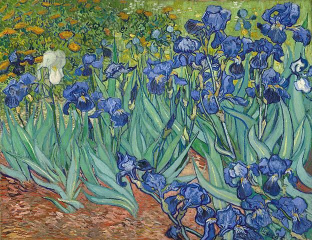 Íris de Vincent van Gogh, não do Getty Center em Los Angeles