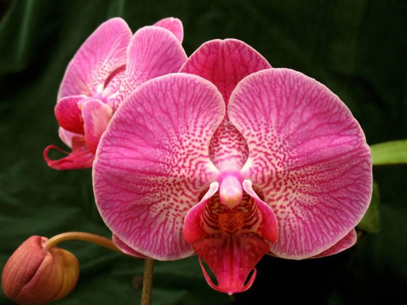 Uma das atrações da cidade é o Orquidário Aranda com mais de 5.000 orquídeas em exposição e cerca de 500 orquídeas à venda
