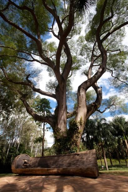 Brumadinho, vila rústica de Minas Gerais, recebe mais de 100 mil visitantes por ano para visitar o Instituto Inhotim