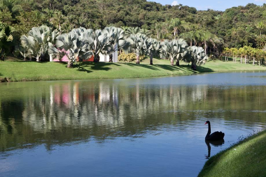 O proprietário, mineiro e patrono do Instituto Inhotim, Bernardo Paz, dedicou 90 milhões de dólares à arte e criou um jardim dos sonhos para recebê-la