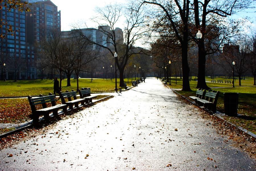 O Boston Commom é considerado o parque mais antigo dos Estados Unidos.  Aqui, vários esquilos parecem posar para as lentes de fotógrafos amadores