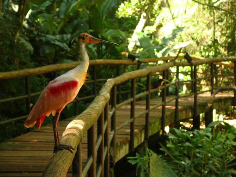 No Parque das Aves você pode aprender sobre os aviários dentro e ver mais de 900 espécies de pássaros de perto