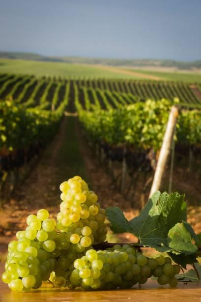 As vinícolas abertas à visitação são as principais responsáveis por atrair visitantes para Garibaldi, no Rio Grande do Sul