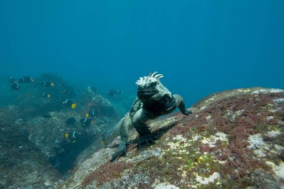 Iguana marinha nas Ilhas Galápagos;  35 fotos tiradas durante a produção do filme Oceanos estão em exibição