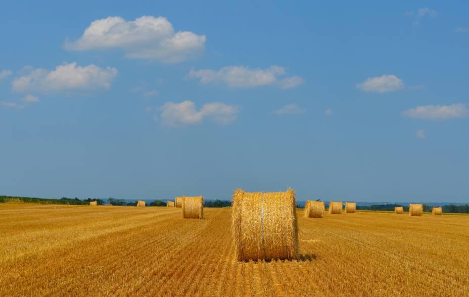 Campo de trigo com rolos de feno, perto do Mont Saint Michel, Normandia, França.
