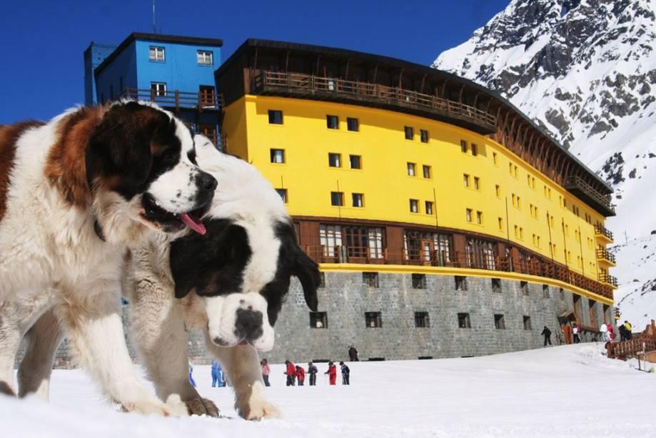 A estação de esqui Portillo está localizada a 164 quilômetros da capital Santiago do Chile, uma das cenas mais comuns aqui é a dos lindos cachorros São Bernardo rondando a área, como no principal hotel do lugar.