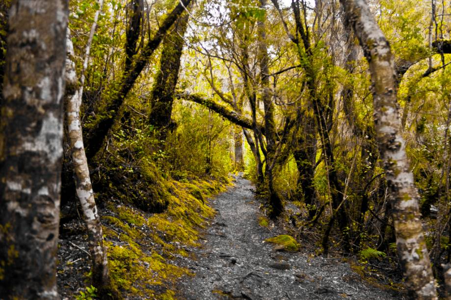 Trilha do Parque Nacional Vicente Perez Rosales, na região andina