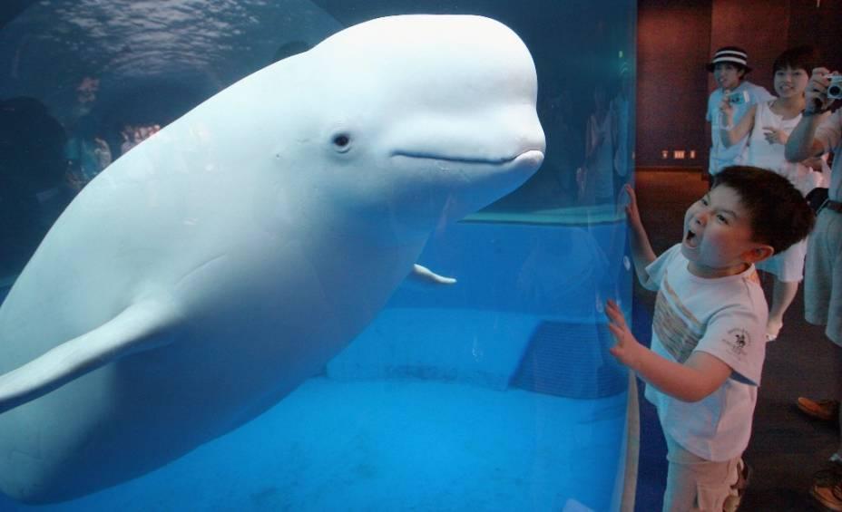 O menino está se divertindo com uma beluga no Aquário Hakkejima Sea Paradise em Yokohama, Japão