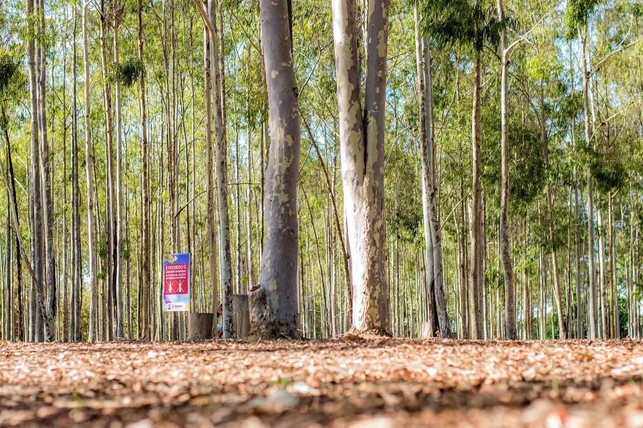 O Parque Euclides Dourado, também conhecido como Parque dos Eucaliptos, é um lugar para relaxar e  a natureza na cidade de Garanhuns