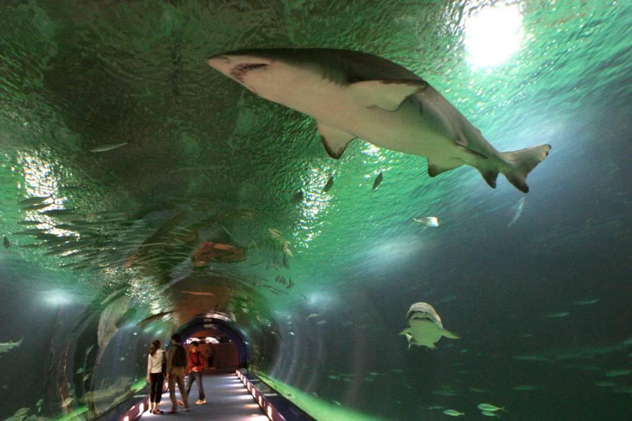 O impressionante aquário L'Oceanogràfic na Cidade das Artes e Ciências de Valência é um dos maiores da Europa