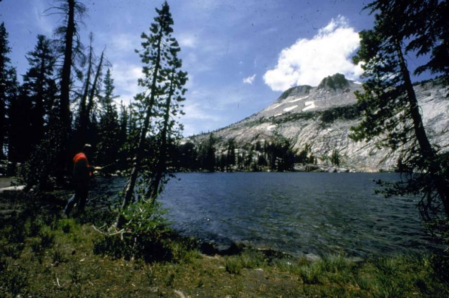 Jeffrey Pine no Parque Nacional de Yosemite